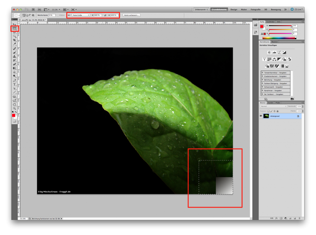 Auswahl erstellen 600 x 600 Pixel.